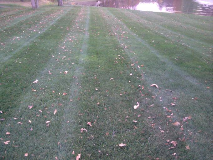 This lawn is treated with Simply-GREEN'S specially blended fertilizer